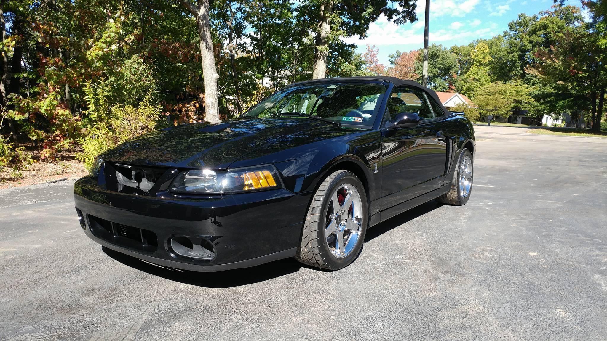 Black Mustang Cobra